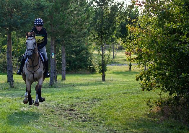 cheval au galop sur terrain cross, sur le temps de suspension, mécanisme du départ au galop