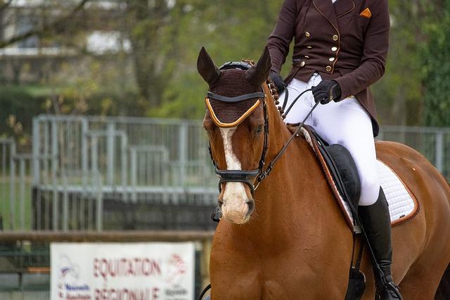 cheval au galop cavalier qui place ses aides de départ par prise d'équilibre