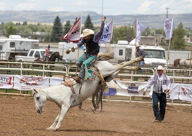 domination du cavalier sur le cheval