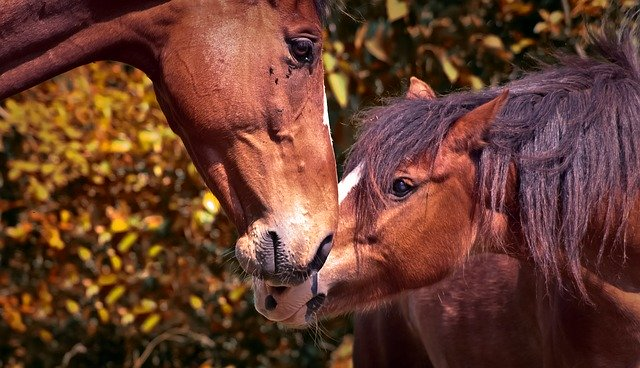 interactions entre les chevaux
