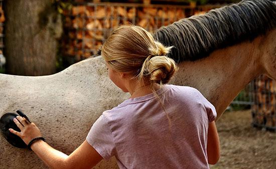 cheval calme et immobile au pansage et à l'attache A dada mon dadou