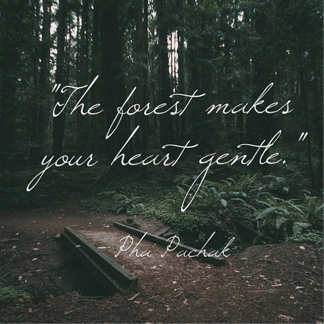 The Forest Makes Your Heart Gentle #Naturehood