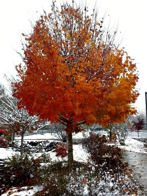 Autumn in the snow. Asheville, NC. Blueridge Parkway Visitors Center. November 2014