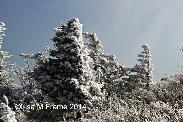 Ice covered trees at Grandfather Mountain. November 2014