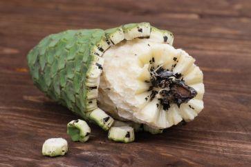 Monstera-deliciosa-weird-fruit.jpg.638x0_q80_crop-smart