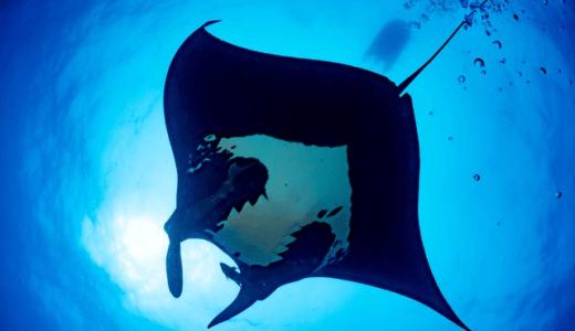 沖縄シーカヤックフィッシングなら「オーシャンブリッジ沖縄」が最もオススメ