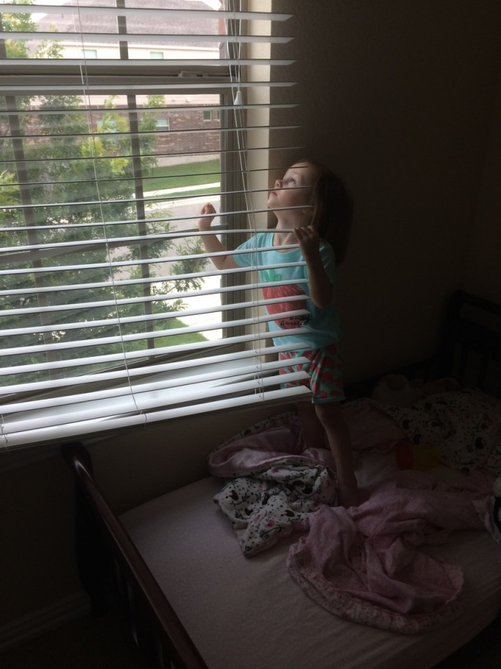 There is a bird that lives right outside of Eliza's window and she loves to watch it from her bed.