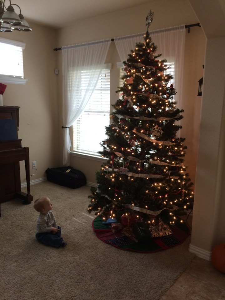 We catch James a lot looking at the tree.