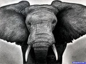 how-to-draw-an-elephant-head-african-elephant_1_000000011366_5