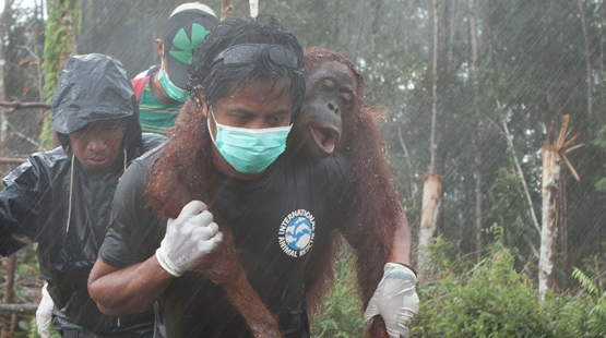 THE ISSUES: antibiotics linked meat and the palm oil killing us and orangutans