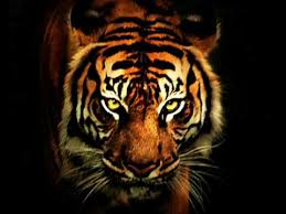 Eye Of The Tiger: Mental Dose #8