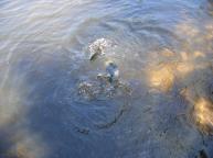 20090700_Michigan_UP_vacation_520
