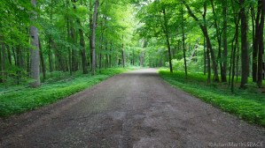 Wyalusing State Park - Road to Henneger Point