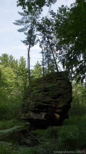 Rocky Arbor State Park - Trees growing from a boulder