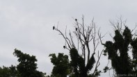 High Cliff State Park - Turkey Vultures