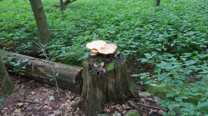 High Cliff State Park - Lime Kiln Trail mushrooms