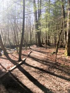 Cataract Falls - Fantastic sunny morning on the trail
