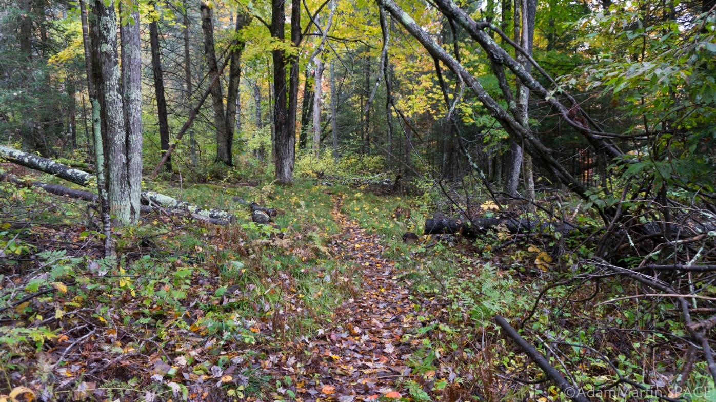 Big Bull Falls - Minimal Hiking Path