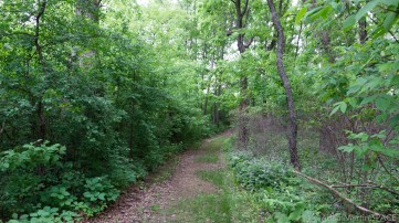 Richard Bong State Recreation Area - Woodland view on blue trail