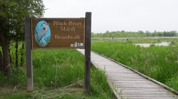 Kohler-Andrae State Park - Black River Marsh trailhead