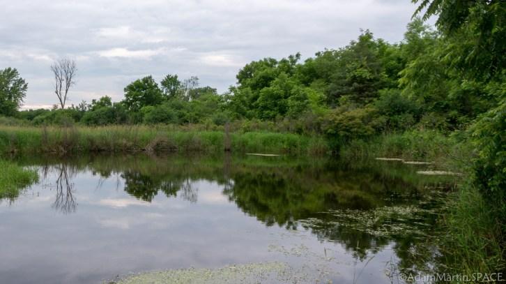 Richard Bong - Pond reflection on Vista Nature Trail