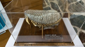 Interstate State Park - Mammoth molar fossil at the Ice Age Interpretive Center