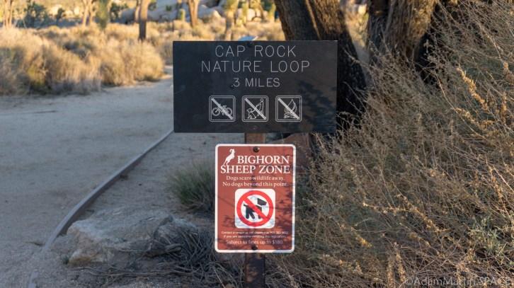 Joshua Tree National Park - Cap Rock Nature Trail