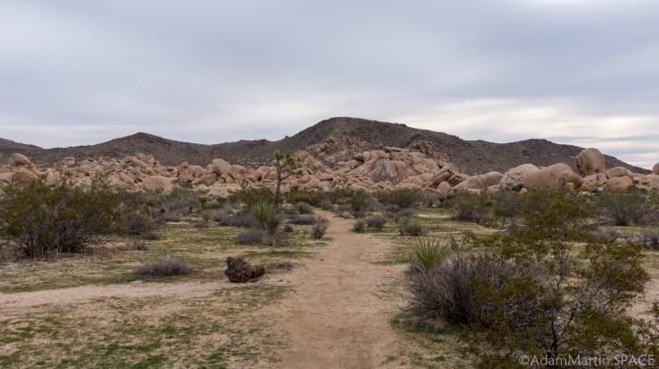 Joshua Tree - Arch Rock Nature Trail