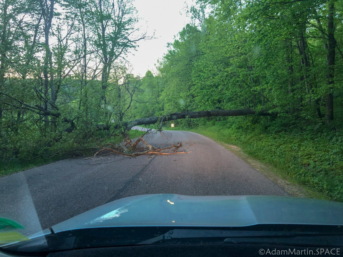 White Mound County Park - Tree Blocking Road