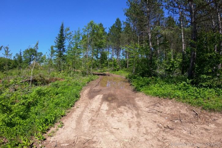 Evergreen Falls - Start of logging road
