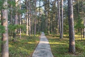 Big Bay State Park - Boardwalk Trail