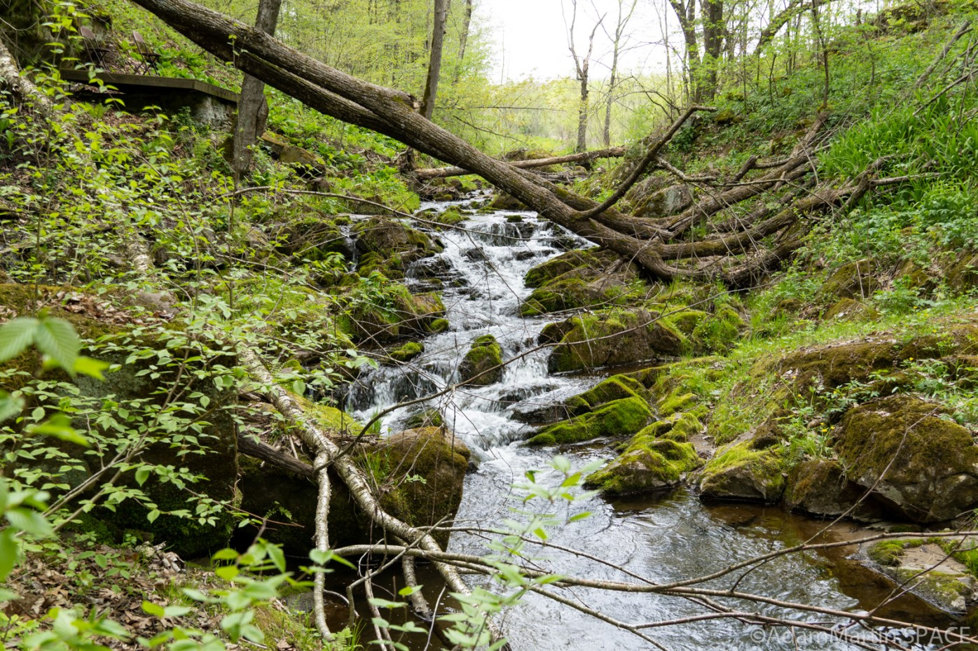 Durward's Glen - View from slightly elevated standing on west bank