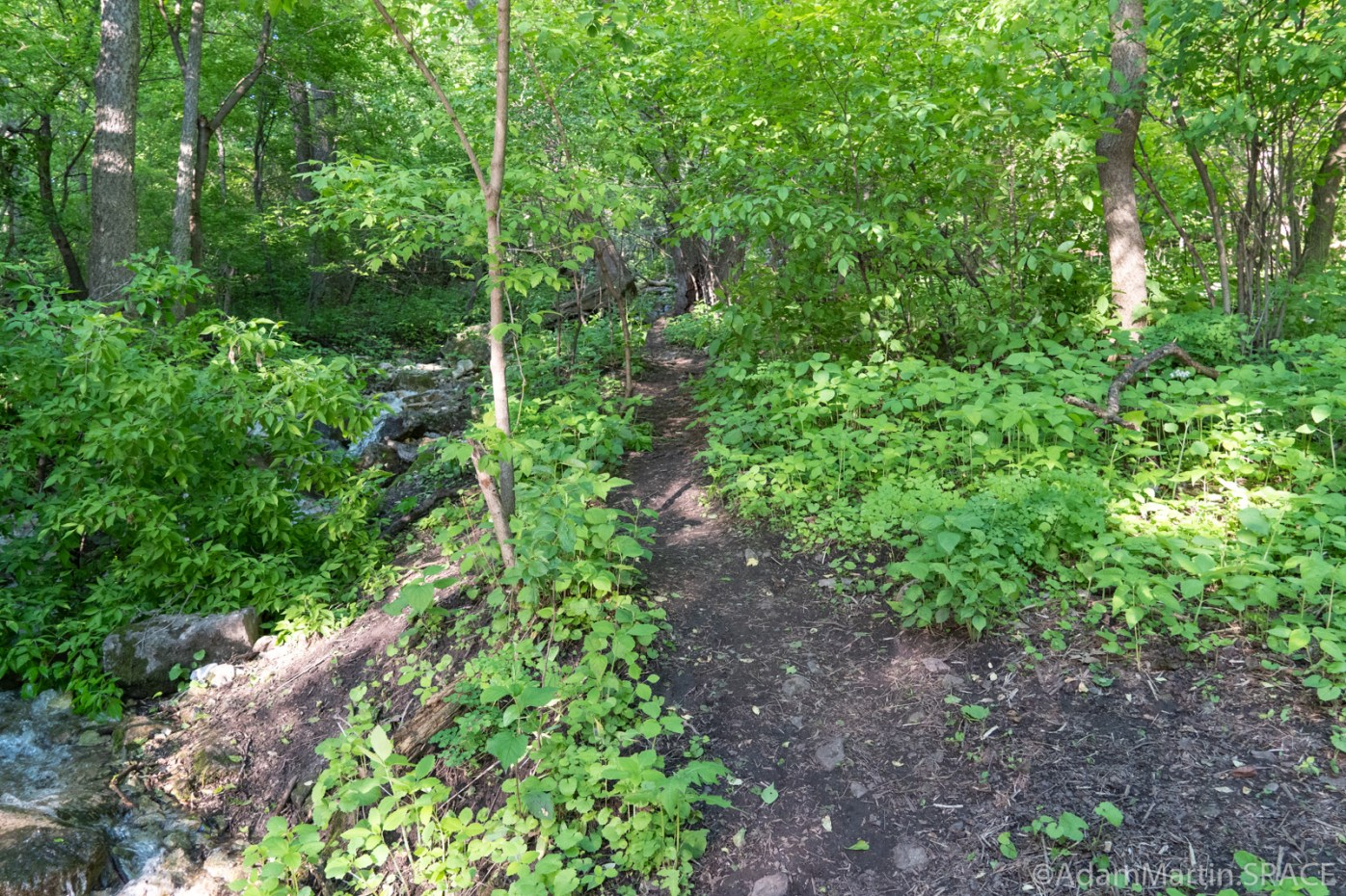 High Cliff State Park - Right-hand incorrect path heading up Lime Kiln Falls (Upper)