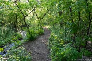 High Cliff State Park - Safer path for Lime Kiln Falls (Upper)