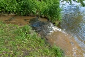 Tripp Falls - View where the creek drains into the Red Cedar River