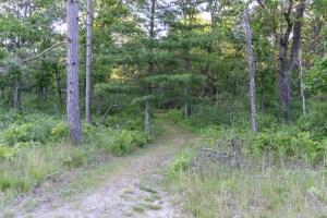 Trout Falls - Hiking path starts near the road