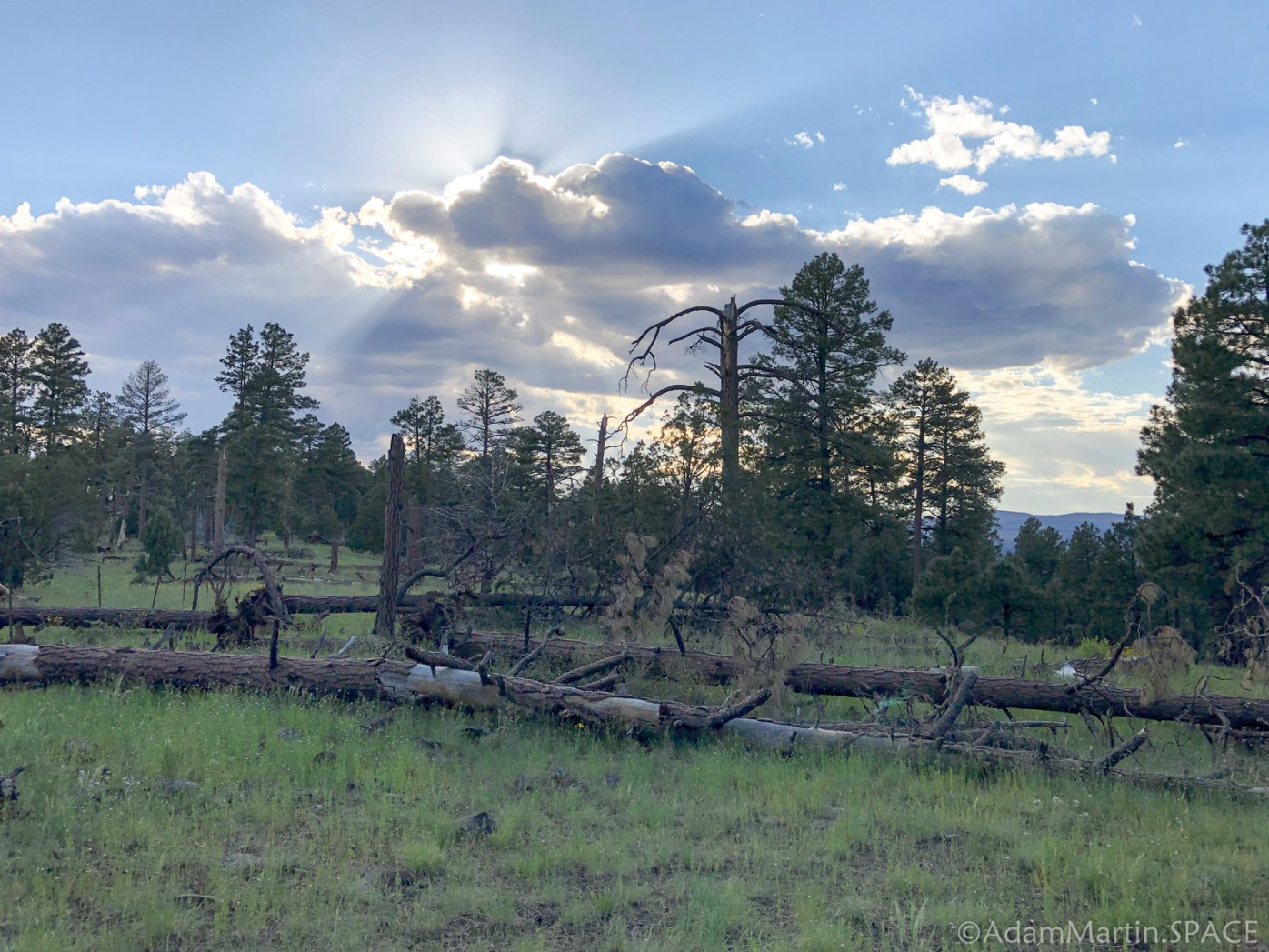 Late afternoon near the top of Loco Mountain looking for elk