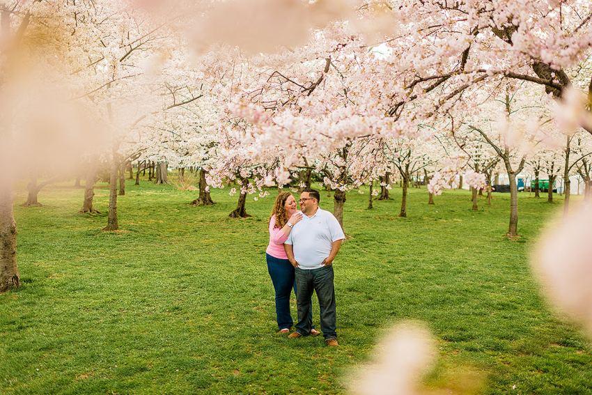 cherry-blossoms-at-peak-bloom-2