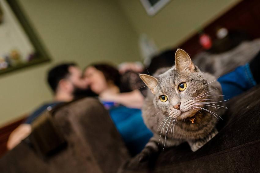 cat themed engagement session by Washington DC Wedding Photographer Adam Mason