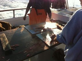 Filleting our catch!