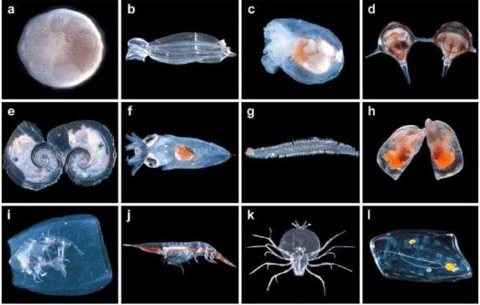 Siklus Reproduksi Zooplankton