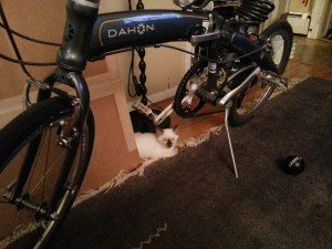 Kitty under Bike