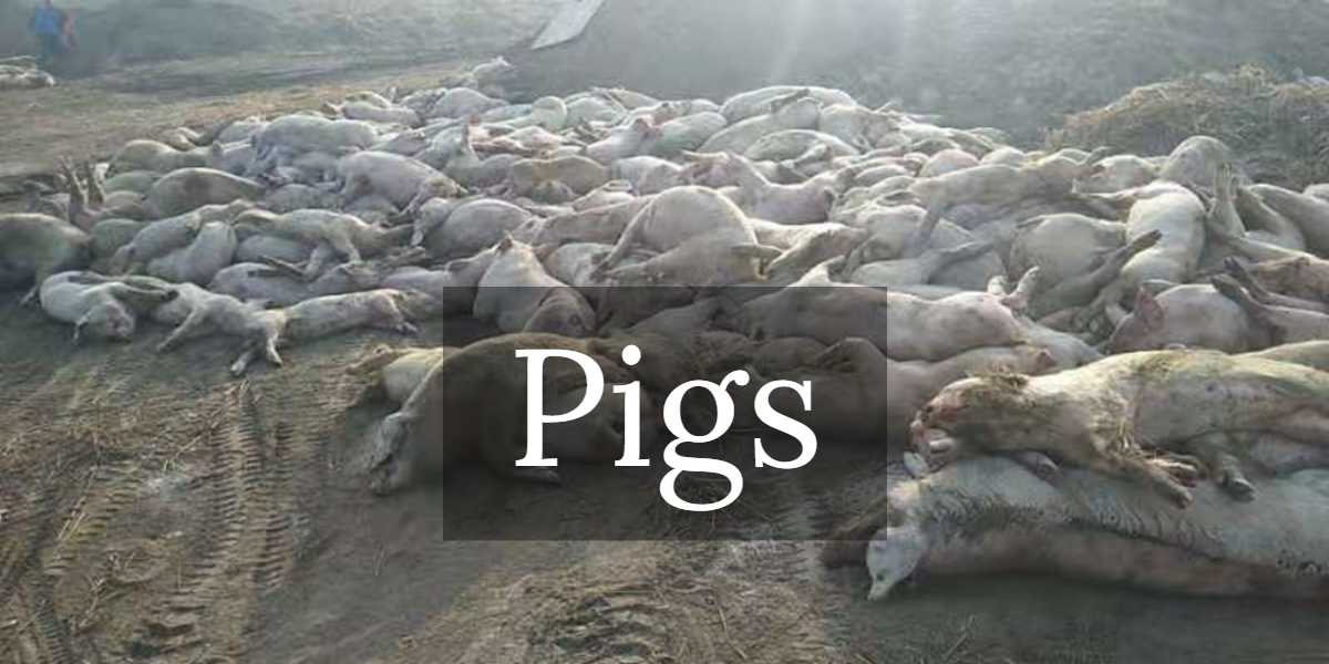 Click For Current Mass Animal Death