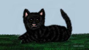 L_Tabby Cat