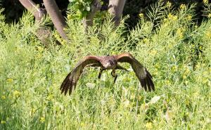 Falcon Images-12