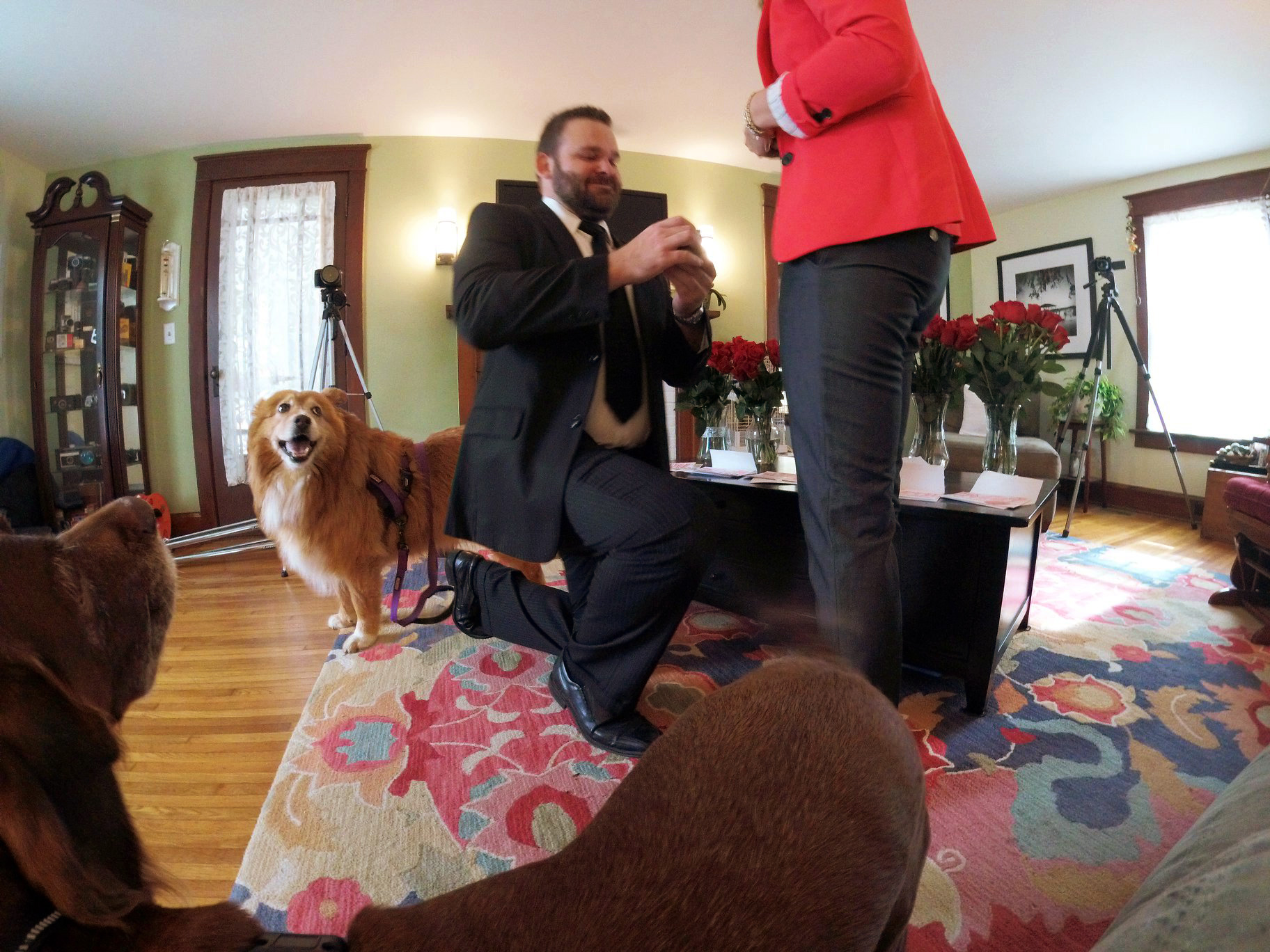 The doggies watch the proposal