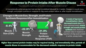 Muscle Disuse Impairs the Muscle Protein Synthetic (Anabolic) Response to Protein Ingestion in Healthy Men