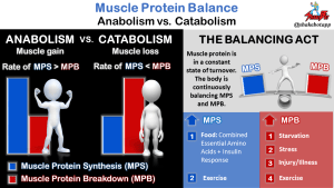 BCAAs and Muscle Growth: Complete Sense, or Nonsense?