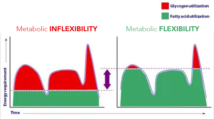 Metabolic Flexibility