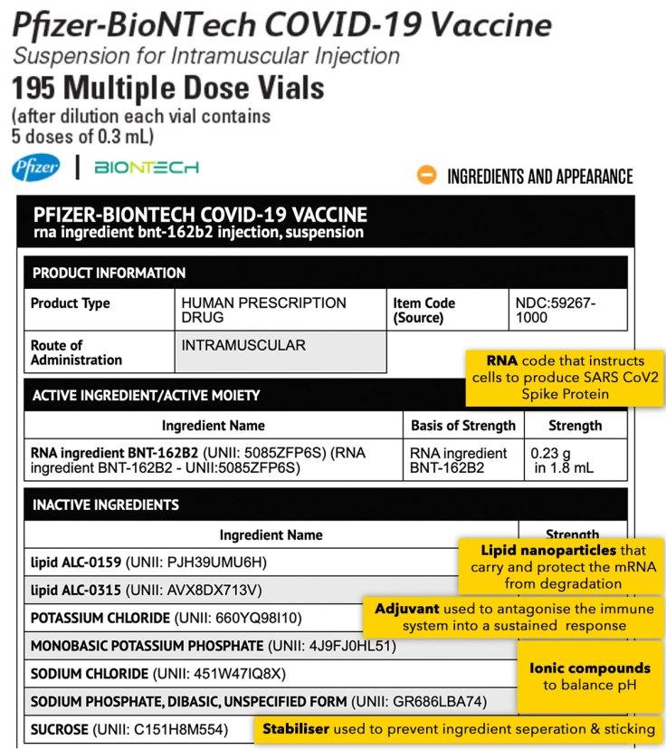 Understanding Pfizer & mRNA Vaccines